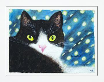 'Black and White cat'