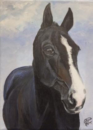 Commissioned horse portrait
