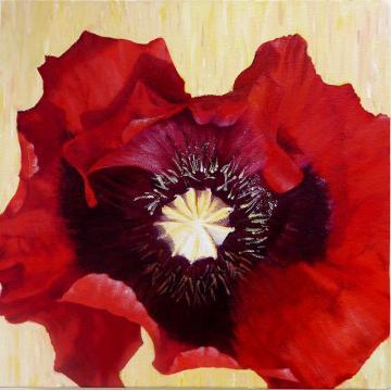 Field Poppy 1