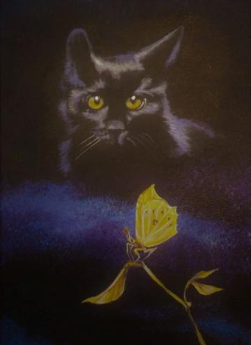 Black Cat & Yellow Butterfly