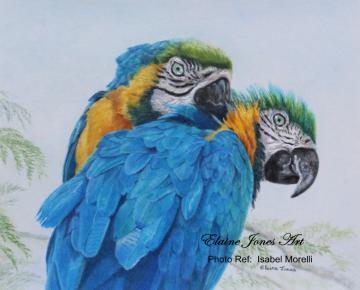 Macaw Mischief