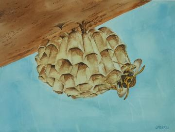 Honeycombe with Bee