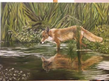 Irish Red Fox