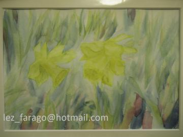 Daffodils and shade