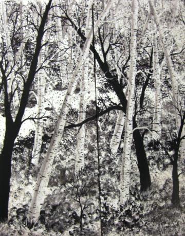 Birch Tree Path